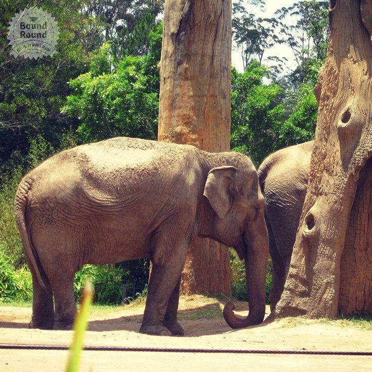 Elephants At Australia Zoo In Beerwah Qld Gold Coast Australia Zoo