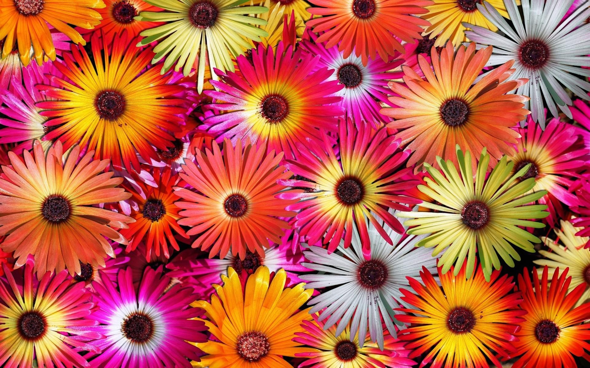 Z Wallpaper Many Flowers Hot Colours - 1920 x 1200 - Nature ... | Go ...