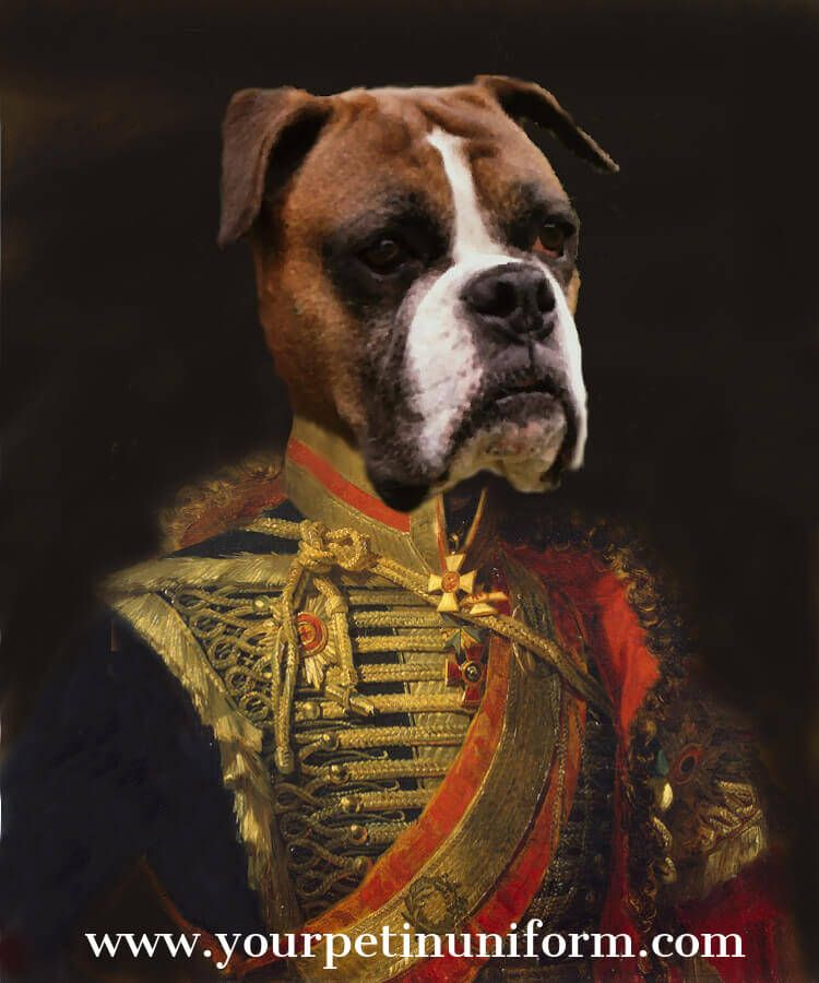 Boxer Dog Pet Portrait Boxer Dog Majestic In Gold Uniform