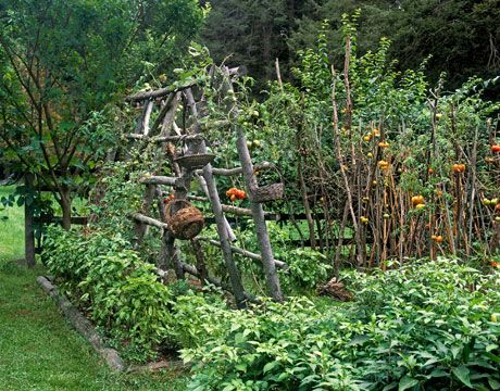 Connecticut Kitchen Garden Gardens Plants and Tomato trellis