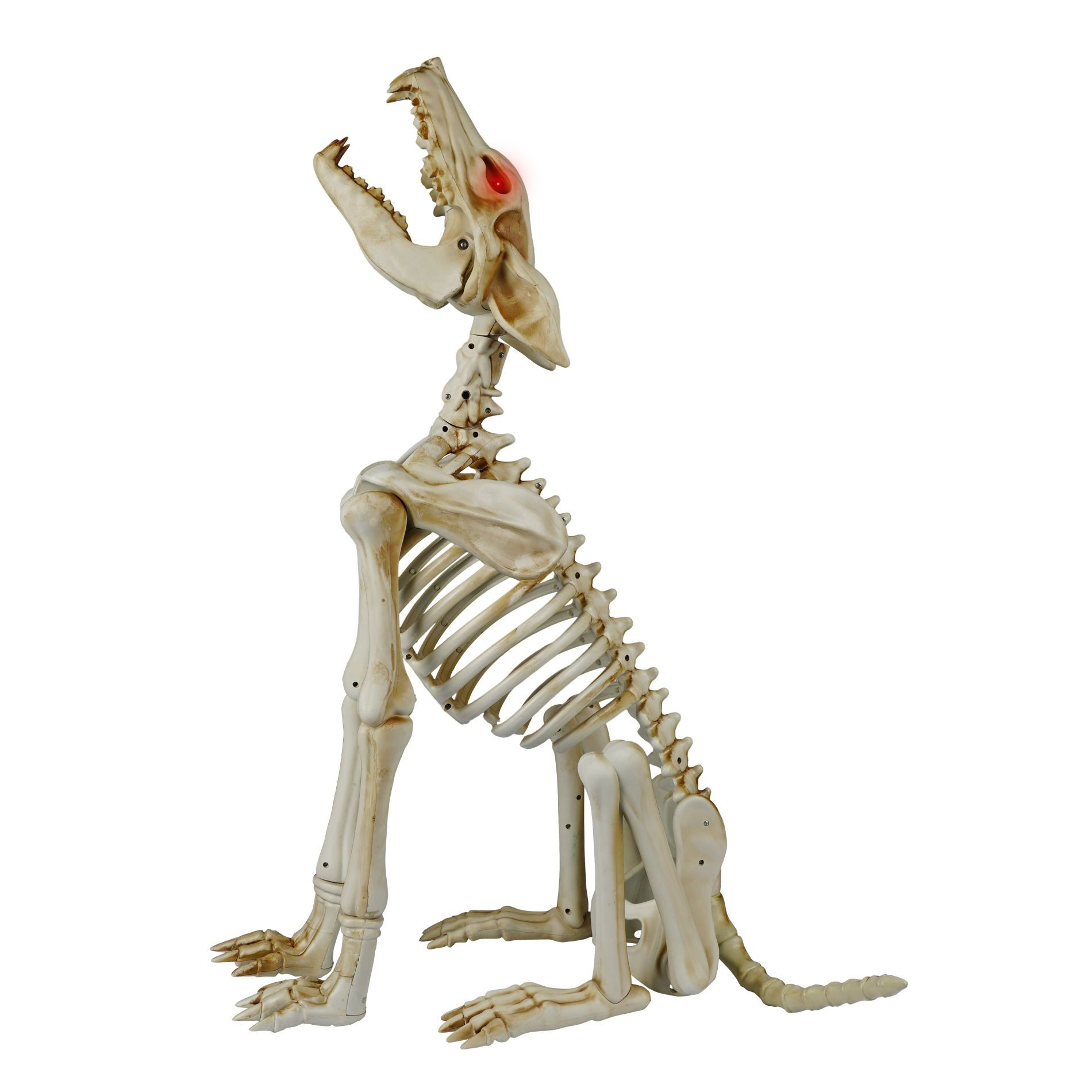 have a spooky howl o ween with the animated howling wolf skeleton - Halloween Decorations Skeleton