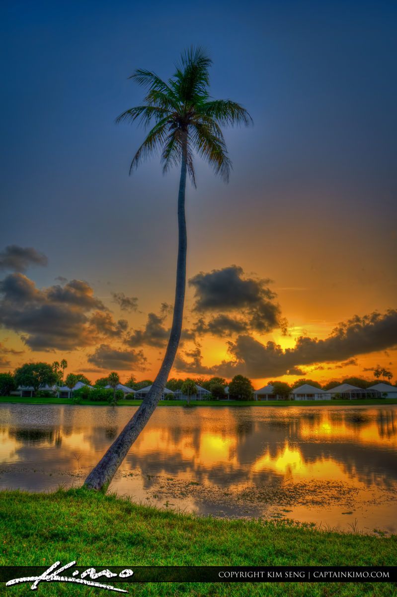 Coconut Tree during sunset at Lake Catherine Palm Beach Gardens ...