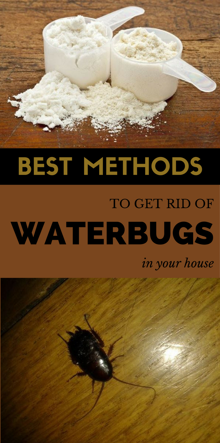 Here Are The Best Methods To Get Rid Of Waterbugs In Your House For Good Get Rid Of Waterbugs Best Pest Control Pest Control