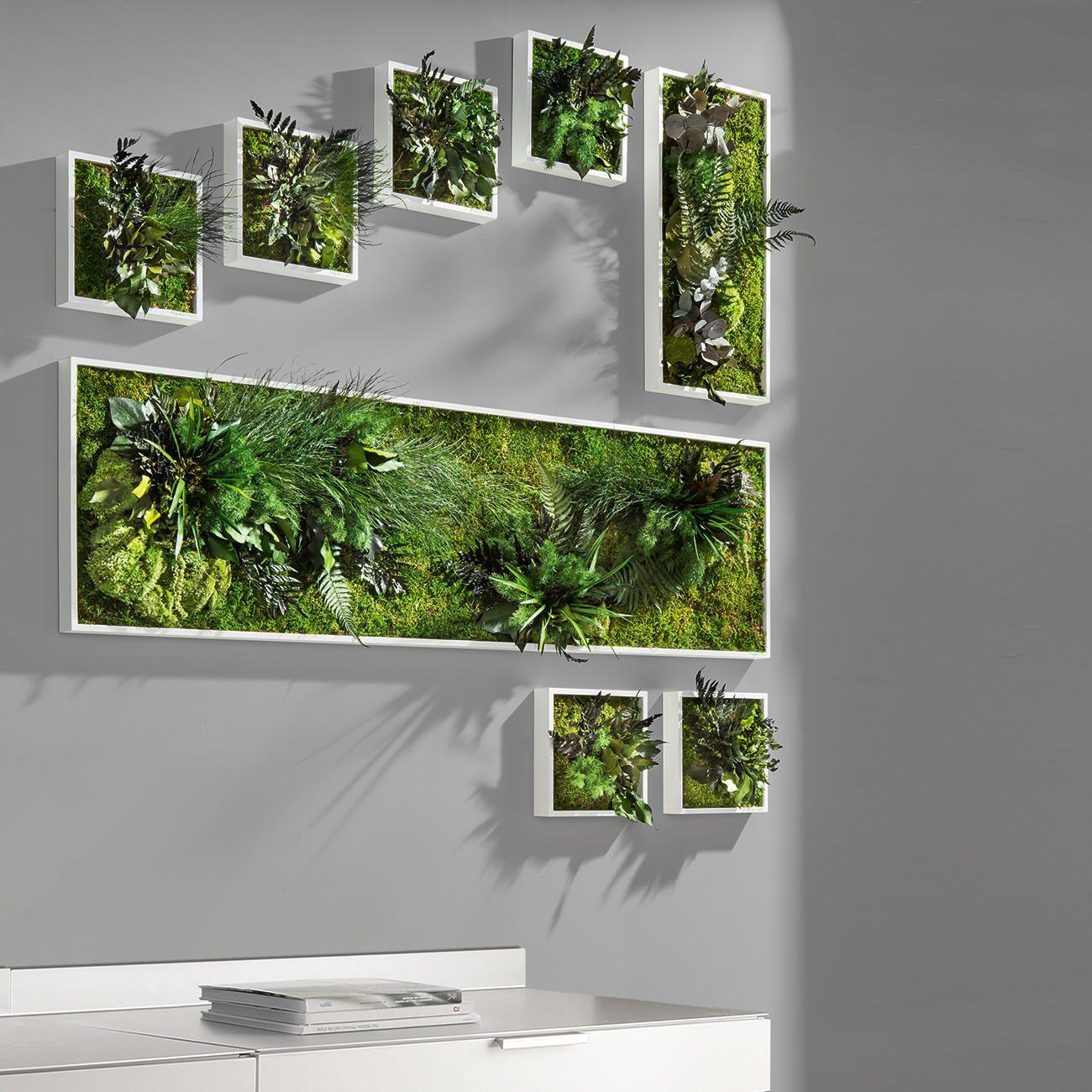 Echtpflanzenbilder 3 Jahre Garantie Pro Idee Pflanzen Wandpflanzen Ummauerter Garten