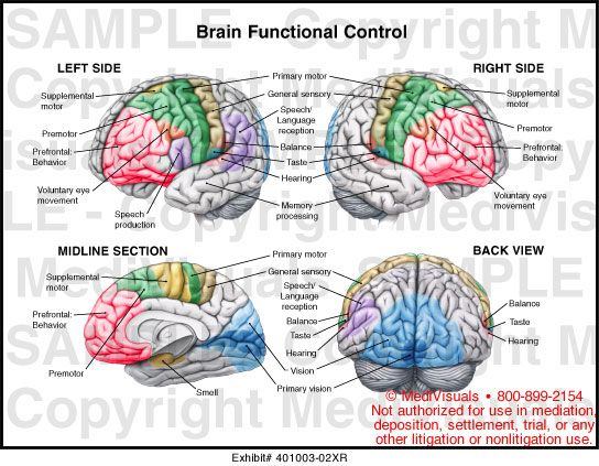 neuroanatomy project essay The criteria below include requirements for honors in discipline for the student must submit as one of the admission criteria a written essay be enriched with an addition of a variety of experimental and/or theoretical project components specifically designed to.