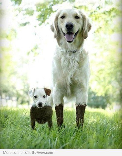 Muddy puppies.