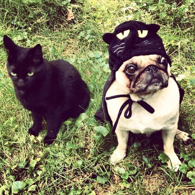 27 insanely clever halloween costumes for your dog - Pugs Halloween Costumes