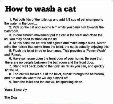 Humor How To Wash A Cat Laughing So Hard Pet Shampoo Cats