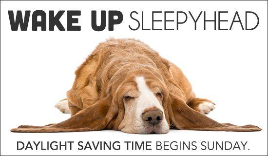 Pin On Pets Daylight Saving Time