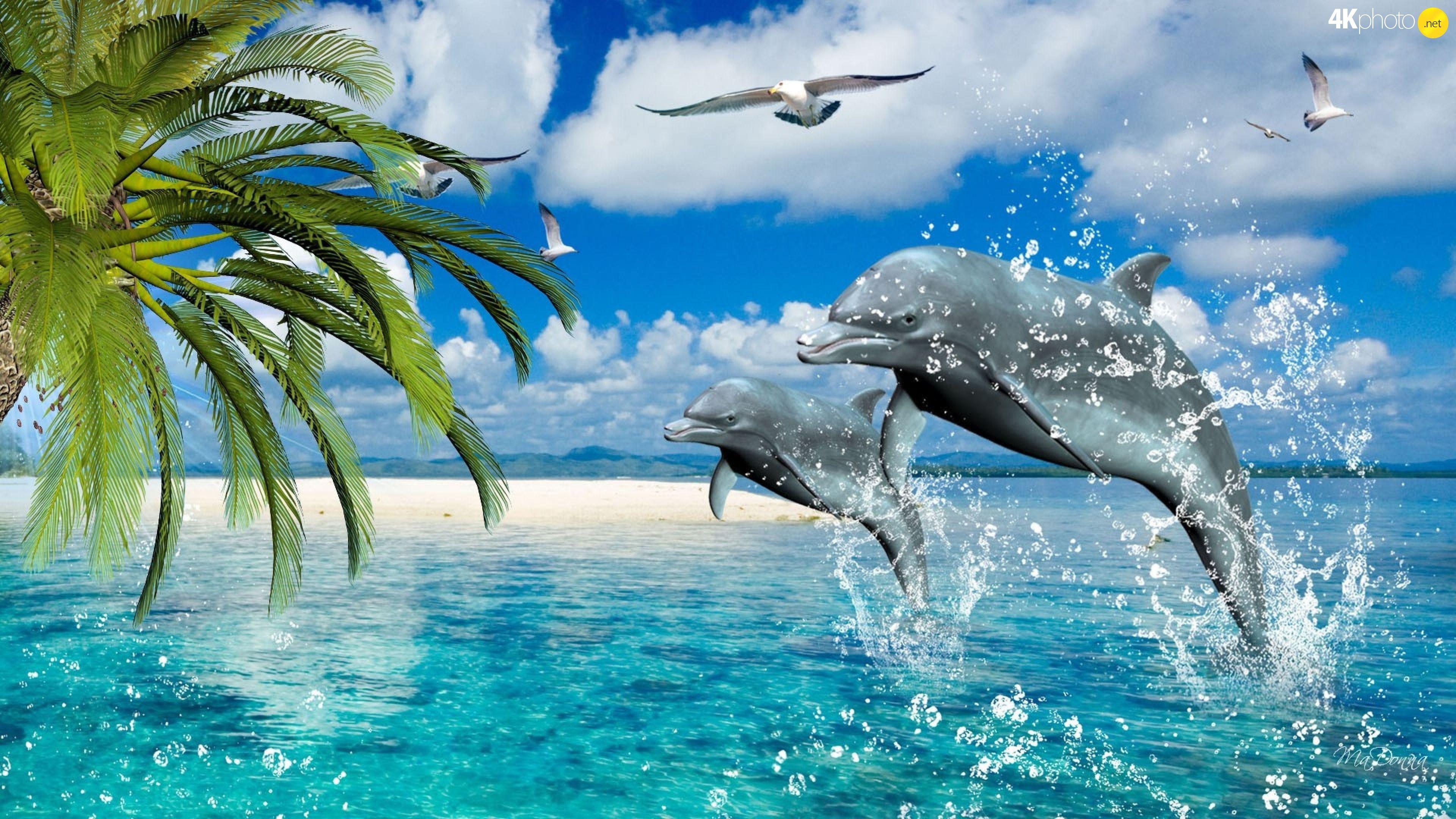 Красивые картинки с дельфинами на море