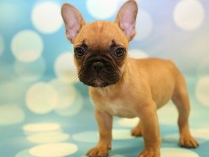 View Our Wide Variety Of Dogs And Puppies For Sale At Petland