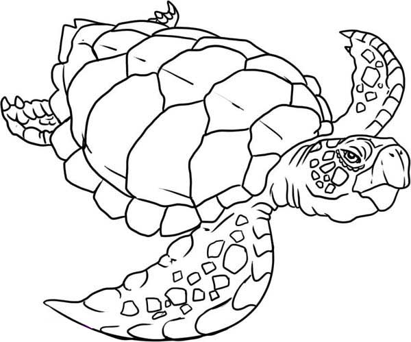 Verry Old Sea Turtle Evolution Coloring Page Download Print Online Coloring Pages For Turtle Coloring Pages Butterfly Coloring Page Detailed Coloring Pages