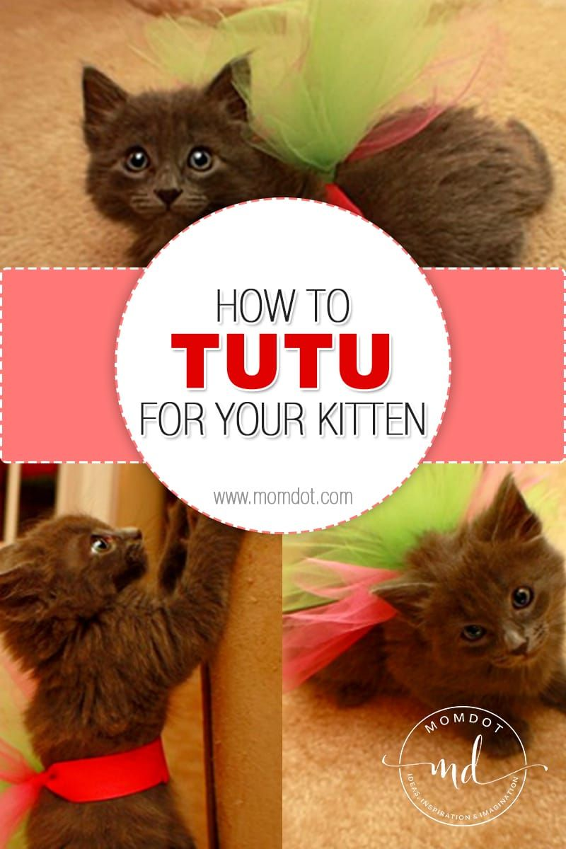 How To Make A Tutu For Your Kitten How To Make Tutu Kitten Spoiled Cats