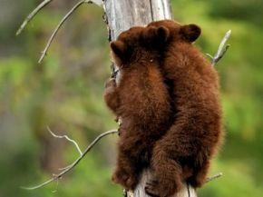 Contexto.com.ar - 15 tiernos animales bebés