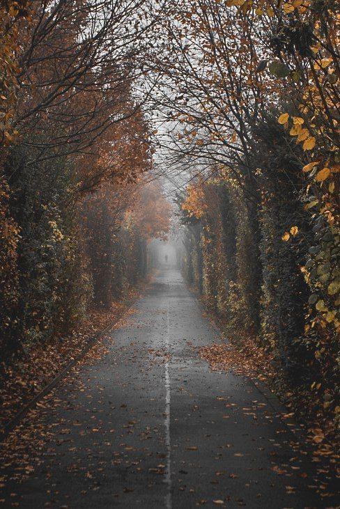 Nine Favorite Things. #autumnscenery