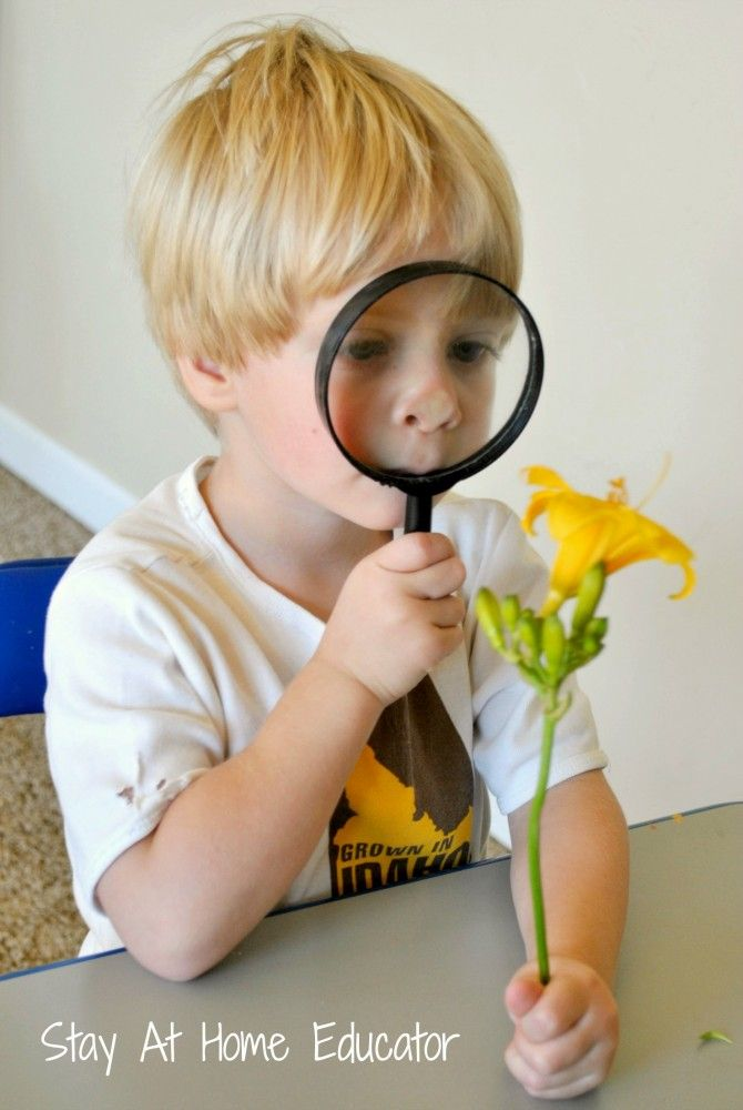 Activities for the Five Senses for Preschool | Learning ...