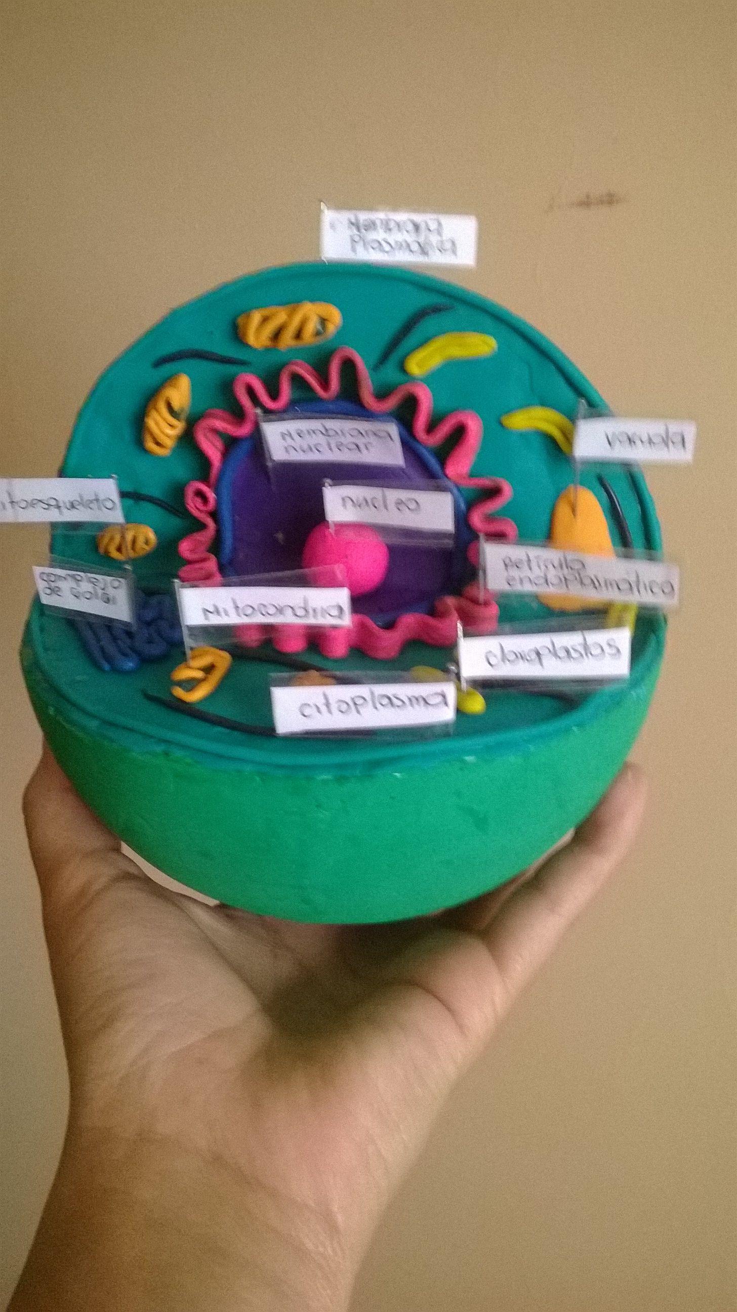 es una célula vegetal hecha en plastilina | mis trabajos manuales ...
