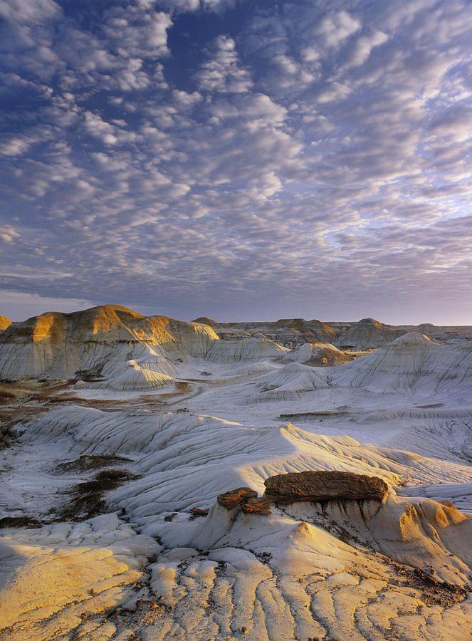 Red Deer River Badlands, Dinosaur by Darwin Wiggett Red