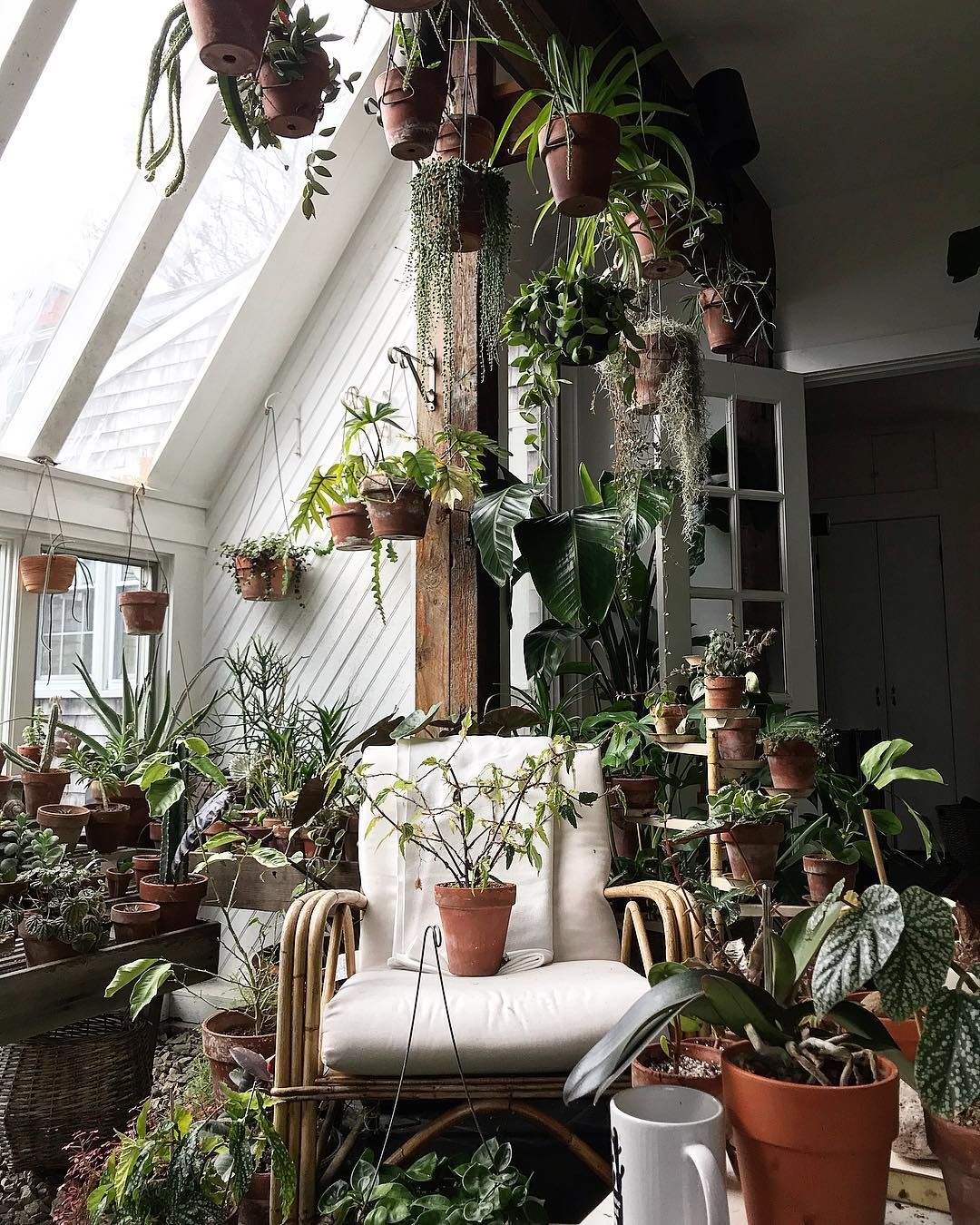 Morning Strategy Meeting To Triage The Powdery Mildew Situation And Begonia Medora Is Having A Time Out To Think About Plants Plant Decor Indoor Diy Plants
