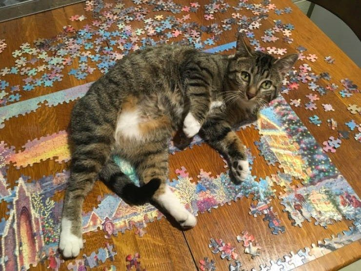 Cats And Puzzles: A Complicated Relationship - I Can Has Cheezburger?