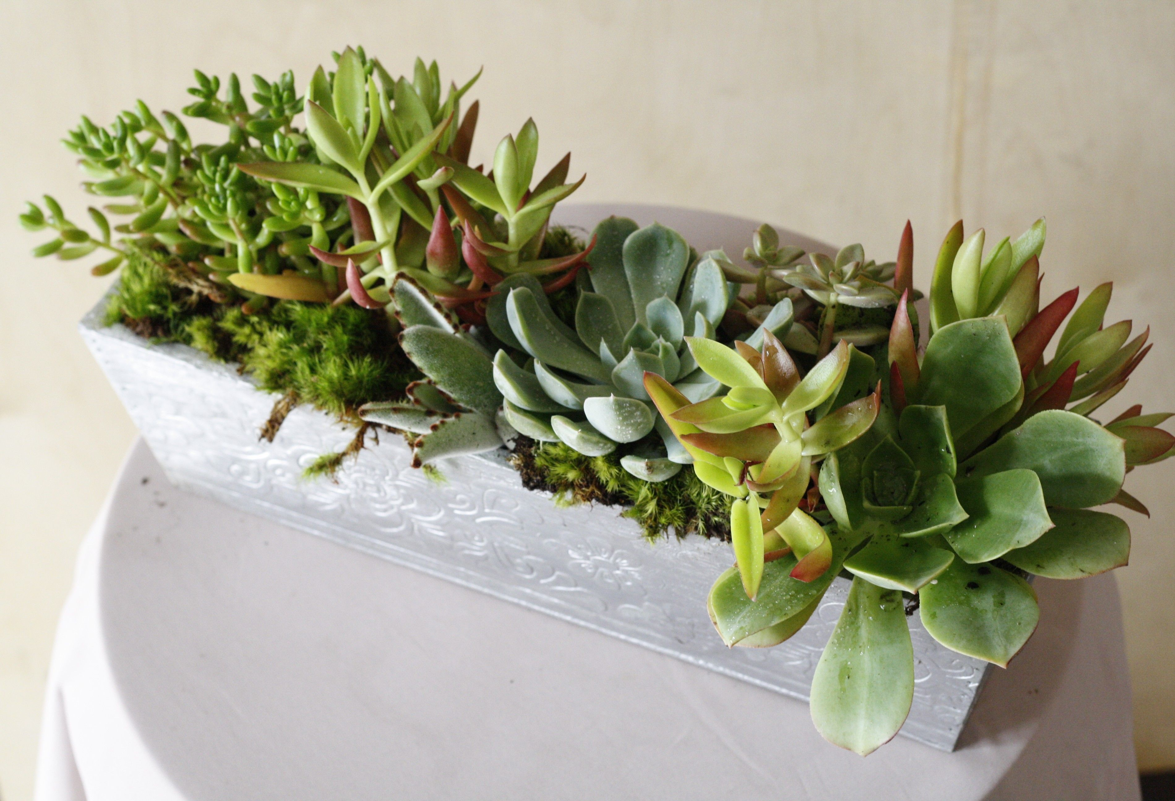 It S Succulentsunday Whether You D Like A Large Centerpiece On Your Dining Table Or Petite Pots Sprinkled Th Succulent Planter Planter Centerpiece Succulents