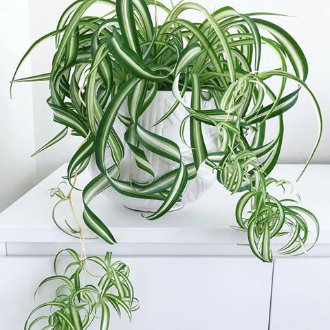 Pin by Opus Grows on guides :: advanced   Air purifying ...