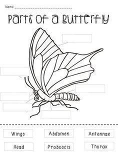 Print out this free butterfly diagram to teach your
