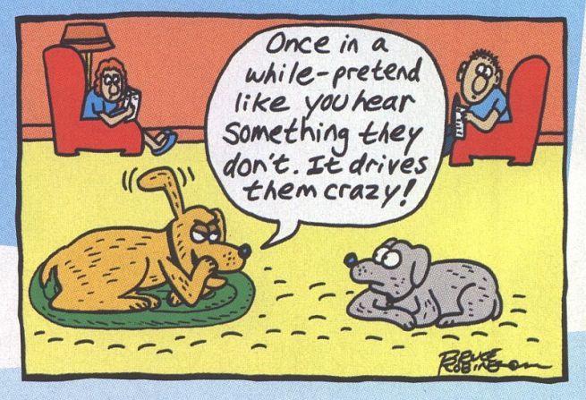 Funny Dog Cat Cartoons Sure To Make You Smile Description