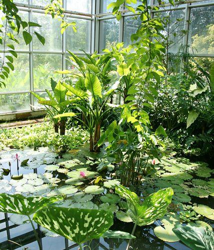 Die Schonsten Tropenhauser In Deutschland Botanischer Garten Berlin Tropenhaus Palmengarten