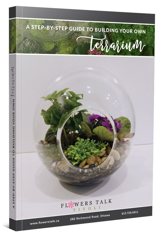 terrarium_opt-in_3d