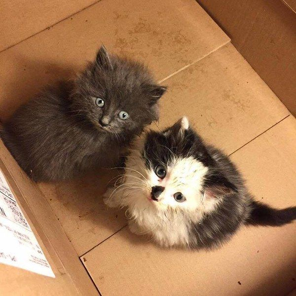 No One Wanted to Take 2 Stray Kittens, This Guy Refuses to