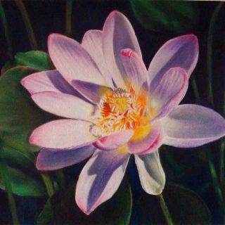 lotus position colored pencil copyright marion romig 2012