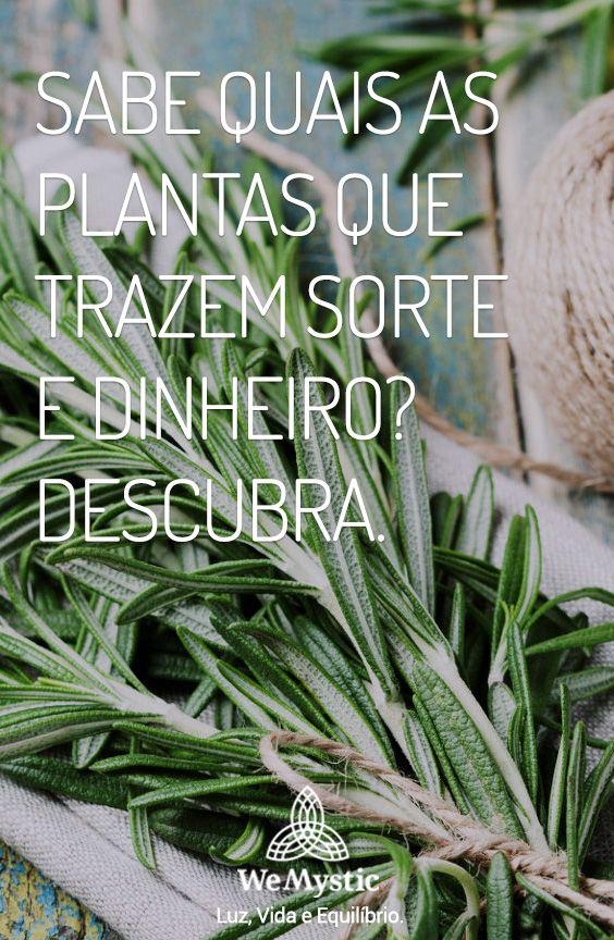 Sabe Quais As Plantas Que Trazem Sorte E Dinheiro Descubra
