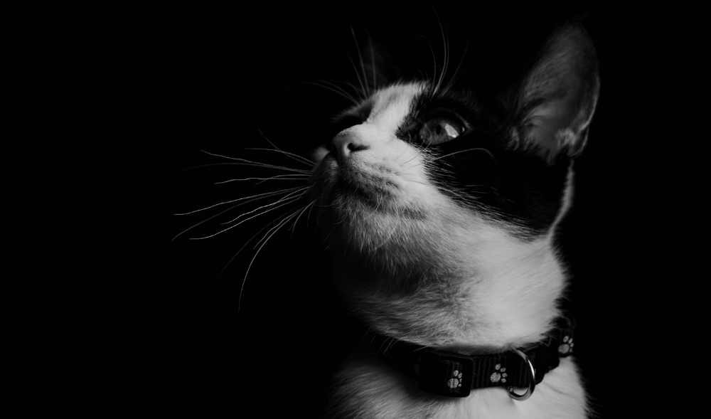 Cat Wallpaper 4k Black And White Collection Laginate Cat Wallpaper Animal Wallpaper Cats