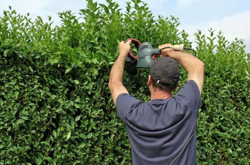 Hedge Trimming Is A Must For A Happy Garden And A Good Environment