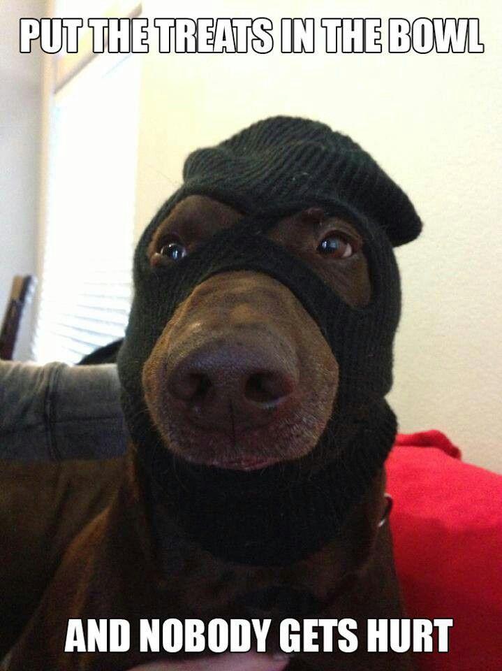 Gangster Dog Funny Dog Memes Funny Animal Quotes Funny Dog