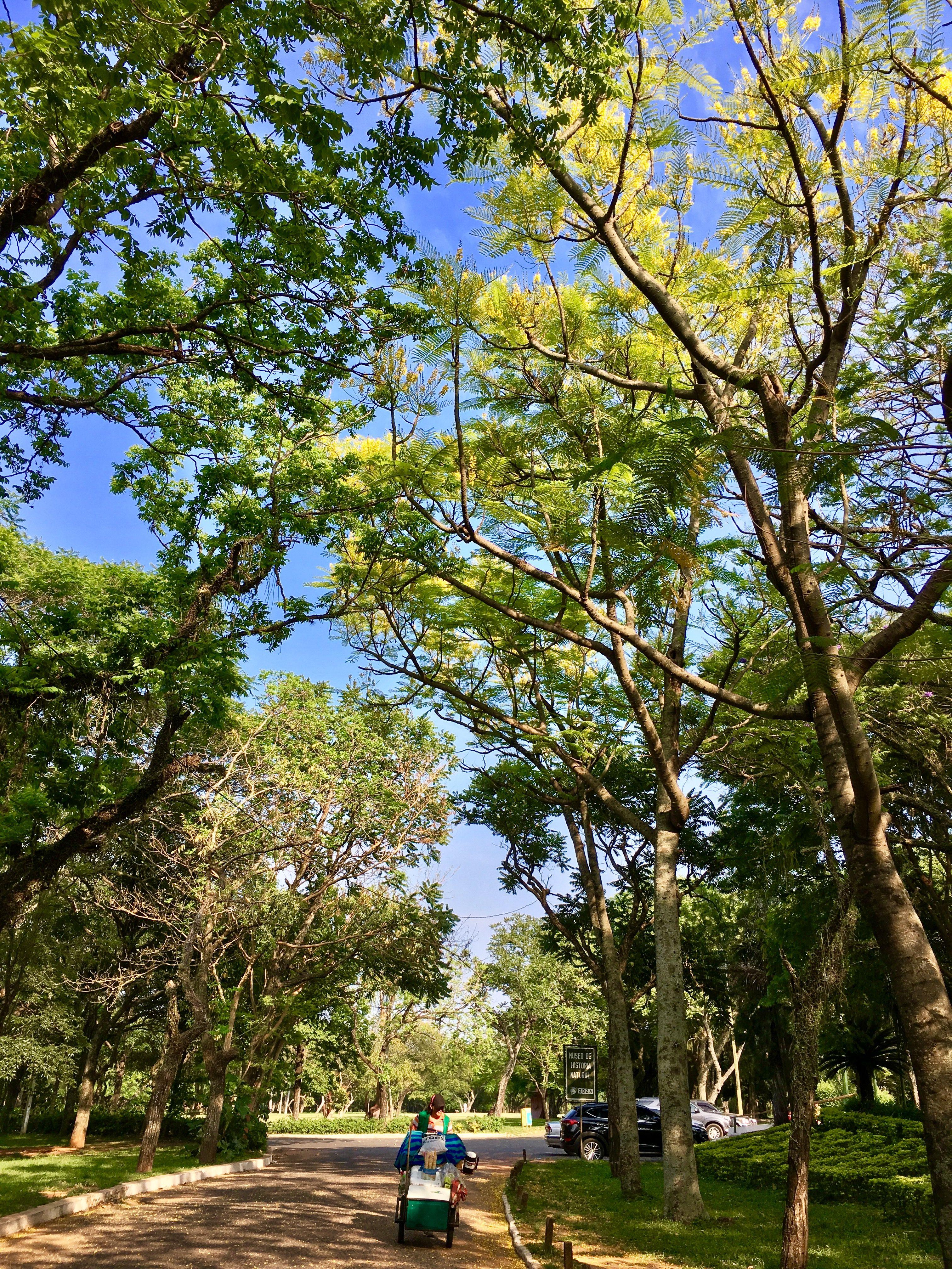 Jardín botánico.Paraguay