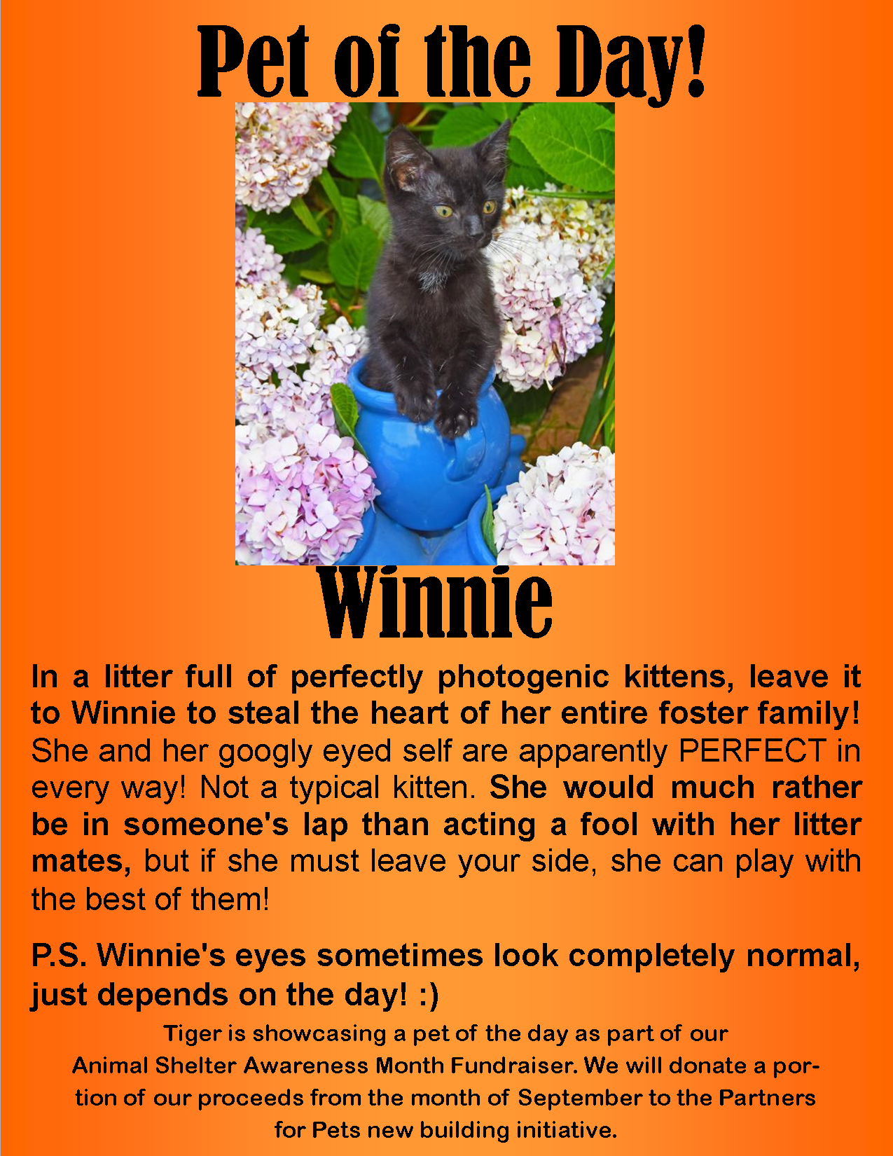 Winnie Sounds Like The Perfect Cuddle Buddy Meet Her At Partners