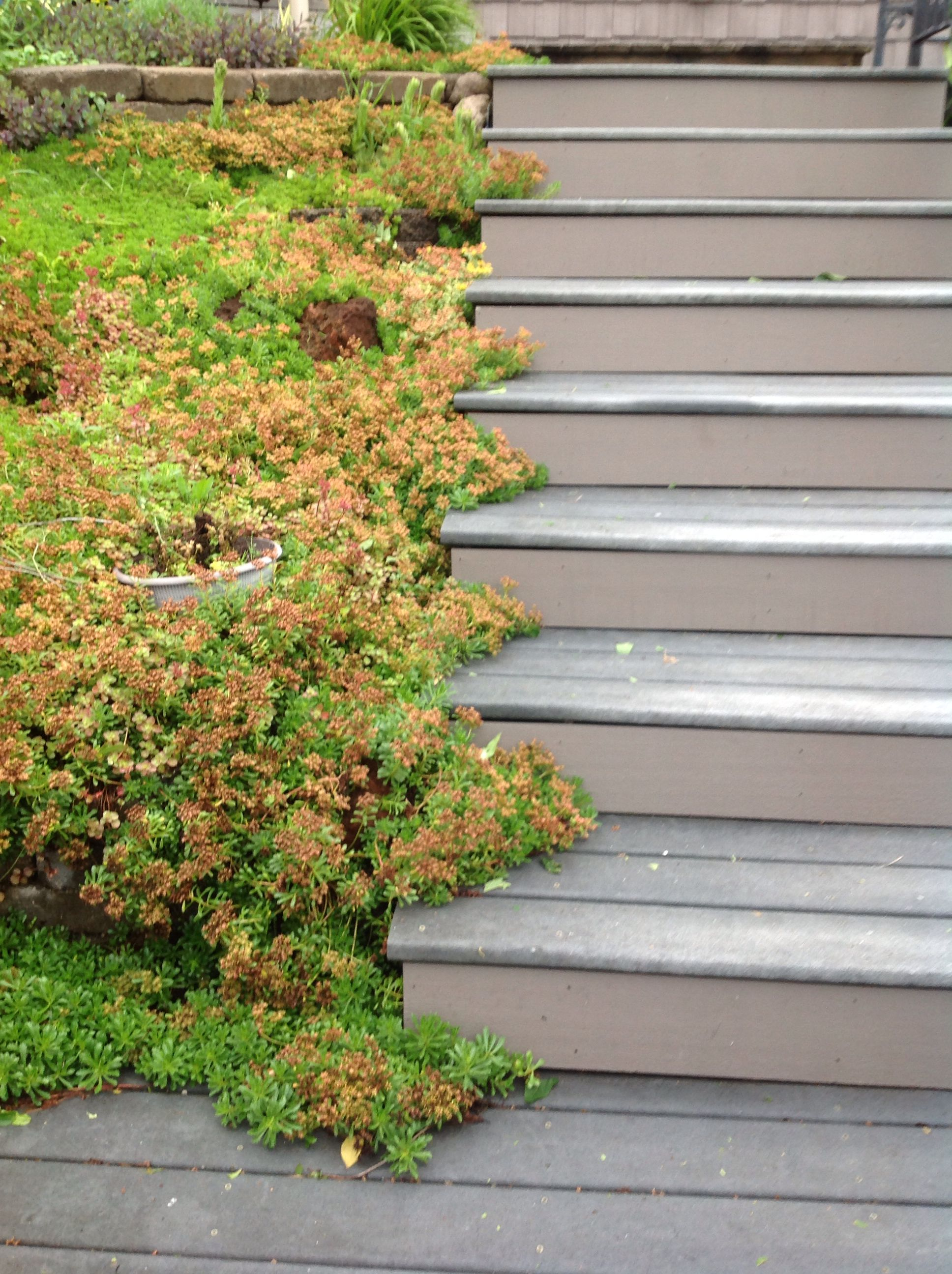 For retaining walls | gardens | Pinterest | Walls and Gardens