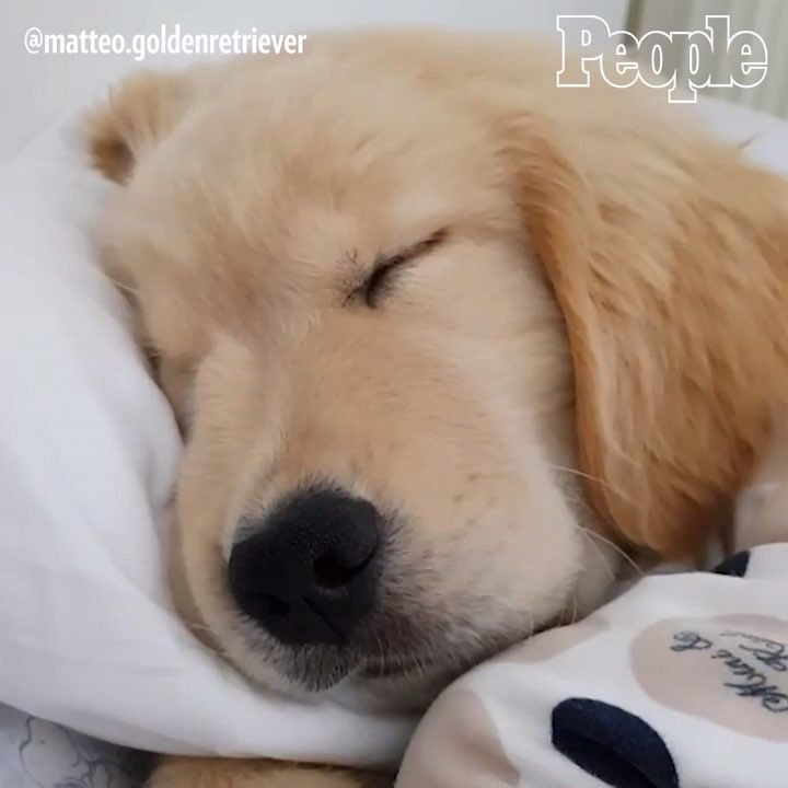 Pin By Melanie Rossi On Golden Animals Cute Animals Dogs