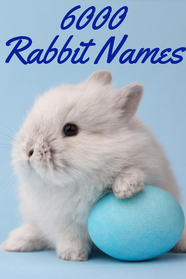 Elegant Rabbit Cute Baby Bunnies Cute Funny Pics Worlds Cutest Animals