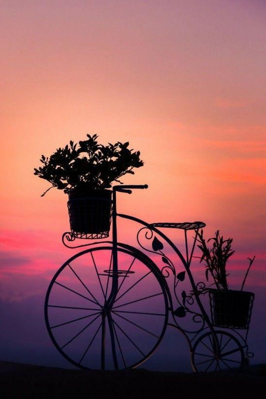 Instagram Challenge: Bicycles -