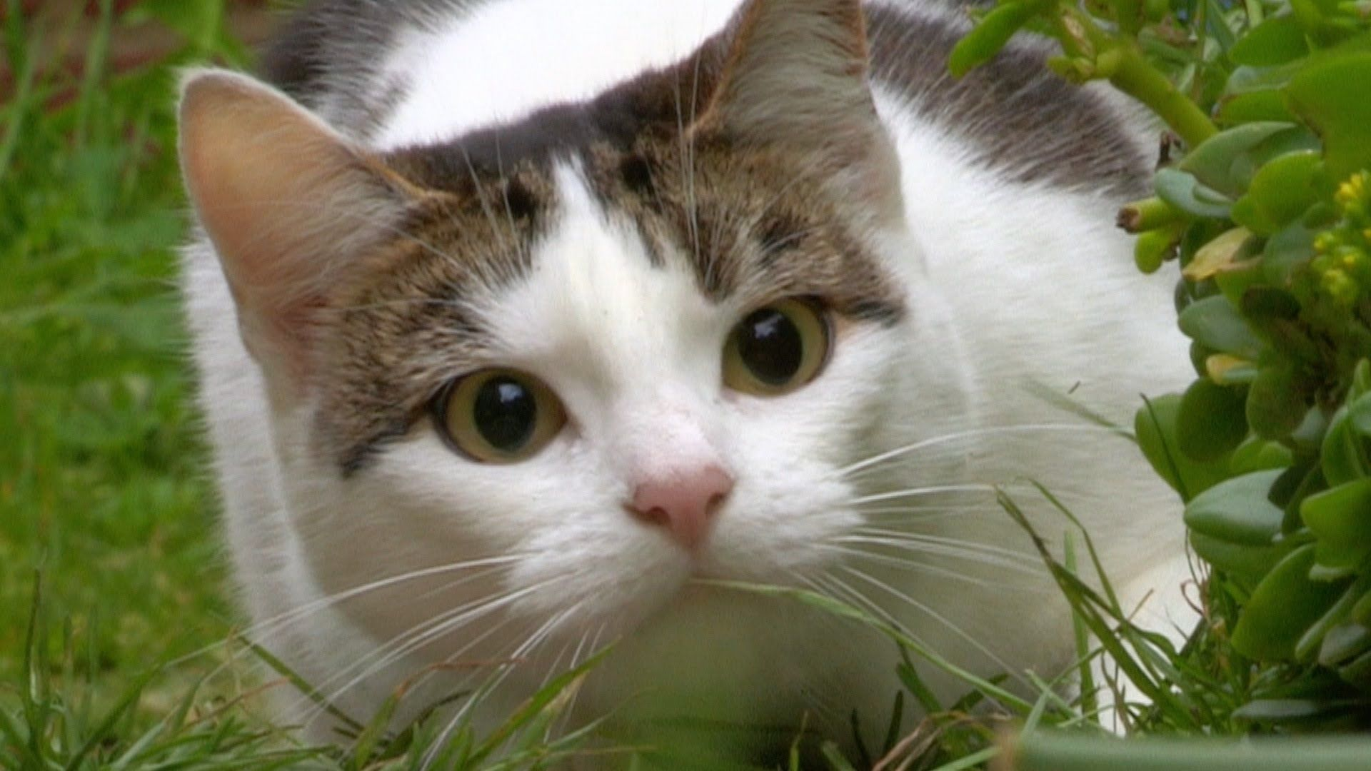 Image Result For Cat Eyes With Images Cat Watch Cat Pupils Cats