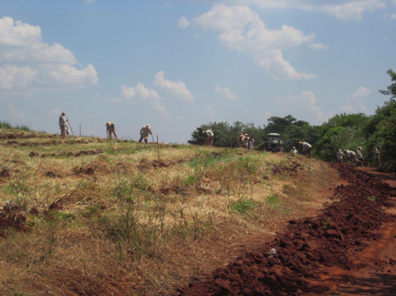 DIRETO DA FONTE - Embrapa pesquisa semeadura direta e adubação verde para restaurar área degradada