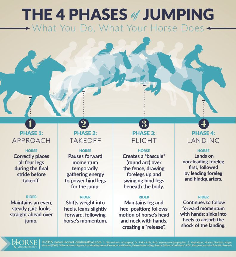 Phases Of Jumping What You Do What Your Horse Does  Equine