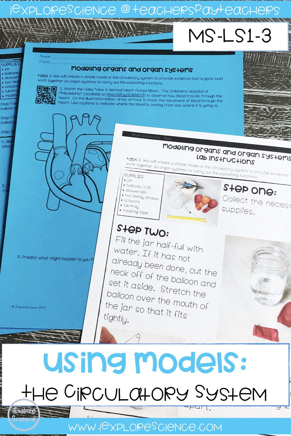 Modeling Organs And Organ Systems Ms Ls1 3 5e Model