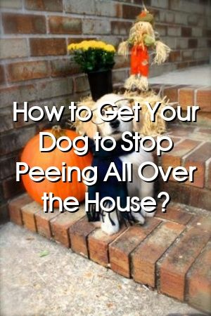 Madeleine Berry Tells About How to Get Your Dog to Stop Peeing All Over the House? #dogsdiys#doghome#dogate#dogdiystuff#dogcat#petscats#animaldiyspets#petstuff