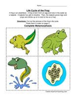 Frog Life Cycle Worksheet Lifecycle Of A Frog Life Cycles Science Life Cycles