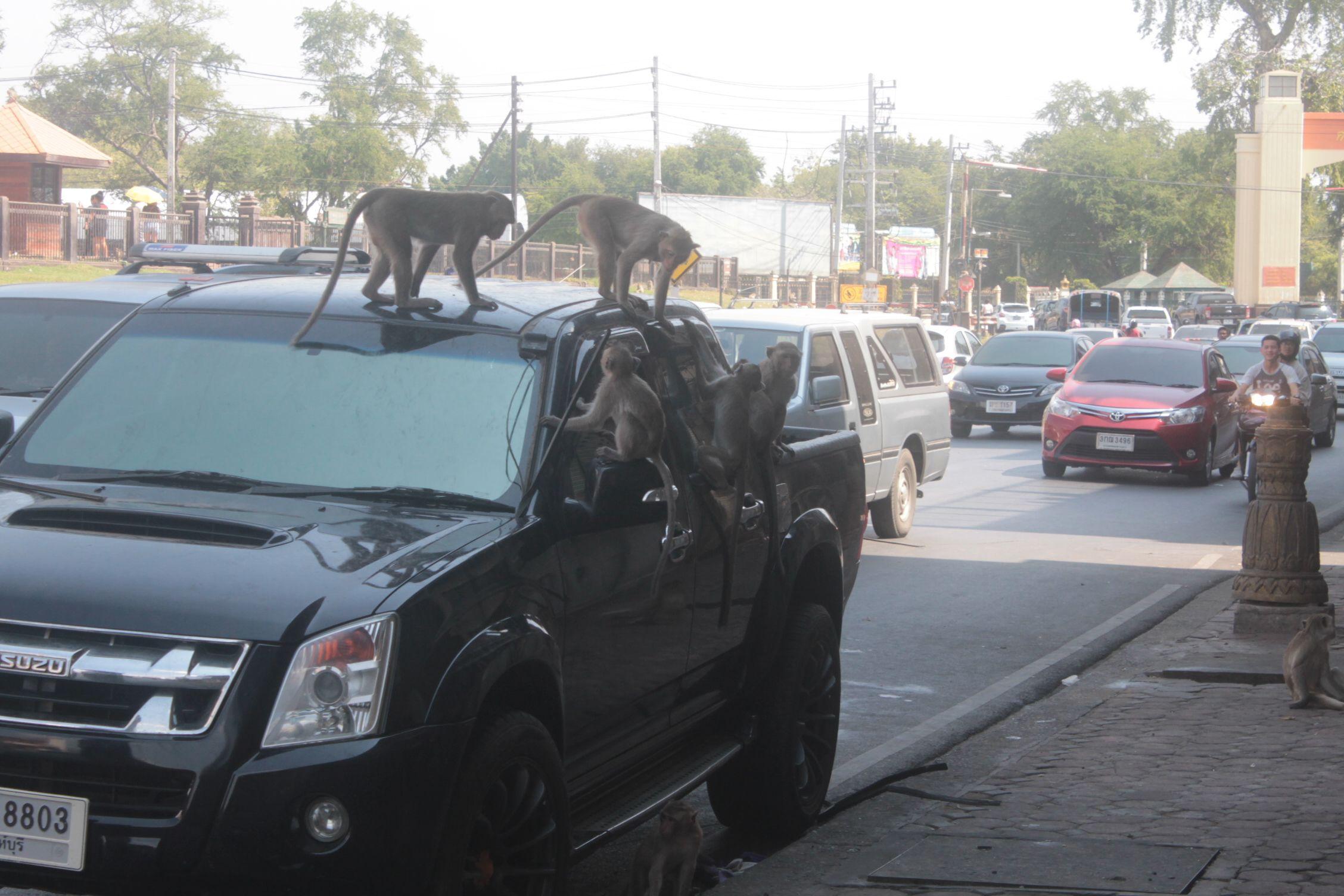 Monos destrozando un coche aparcado