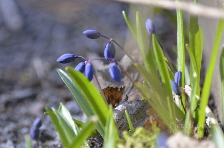 http://www.pienilintu.blogspot.fi/2014/04/floral-love.html